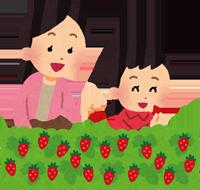 イチゴ狩りをしている親子