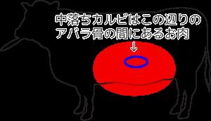 中落ちカルビはアバラ骨の間にあるお肉
