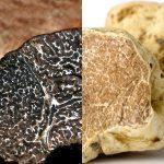 トリュフの白と黒の違いは?特徴・産地・食べ方・値段の違いをまとめました
