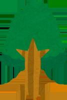 爪楊枝の原料の木のイラスト