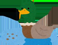 池を泳ぐ鴨のイラスト