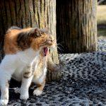 野良猫が喧嘩する理由は?夜に鳴き声がうるさいからどうにかしたい時の対処法