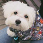 犬の服の素材は何がオススメ?犬の服の選び方や服を着せる理由について